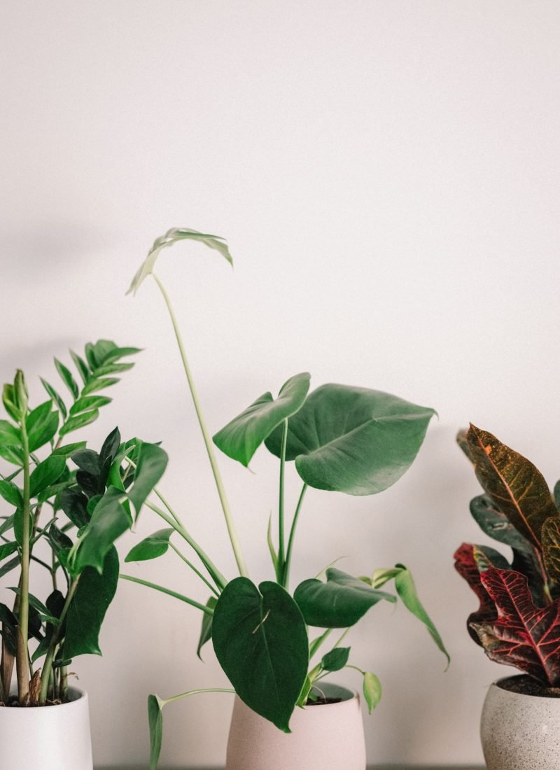 Colorful Indoor Plants to Improve Your Home Decor